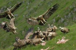 Des vautours sur un charnier.jpg