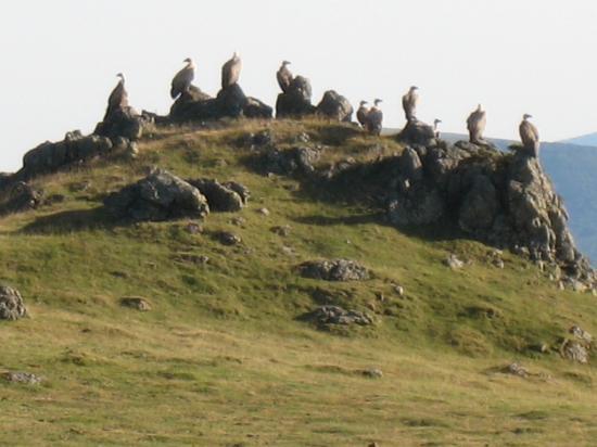 vautours-au-sommet-de-lOkabe.jpg